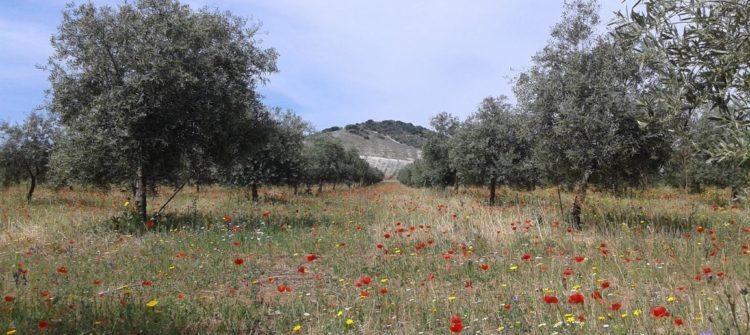 flores-siete-aranzadas1